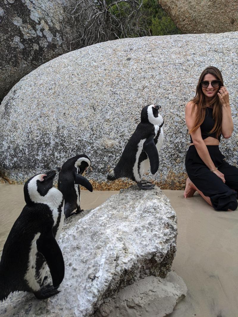 Südafrika urlaub Pinguine